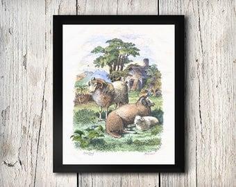 Sheep Ram Ewe Spring Lamb Farm Scene Poster on Photo Paper 8x10 to 24X30 Guerin