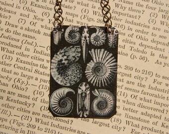 Ernst Haeckel necklace Sea Life mixed media jewelry