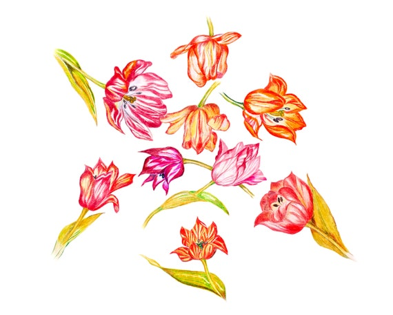 LIMITED EDITION of Strewn Tulips symbolizing True Love and Heralds of Spring; Art Print of Pencil Drawing, Sping Flowers, Energy Flowers,