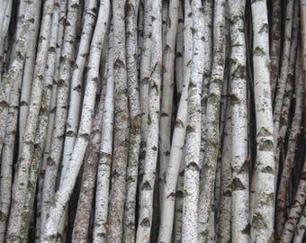 """White Birch Poles/logs Two Poles 2 1/2"""" to 3"""" D x 6 ft"""