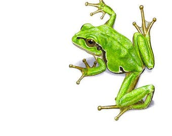 Green tree frog Greeting Card (code HA07)