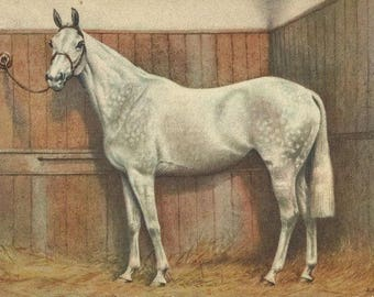 Alderson Grey - Vintage 1940s Artist-signed Irish Sport Horse Postcard