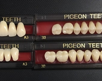 One Complete Set of PIGEON TEETH