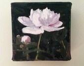 "Single peony, original  small oil painting , 4""x4"" by Maine artist Adrienne Kernan LaVallee floral garden peonies MyMainePaintings flowers"
