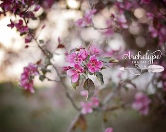 Digital Download Photograph {Violet Dreams} Nature Purple Blossoms Picture