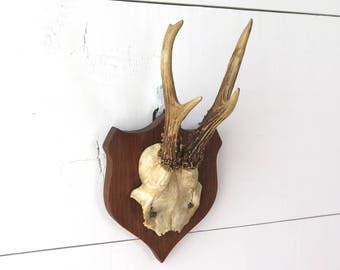 Roe Deer Mount, German Roe, Real Deer Antlers, Wall Art, French Country, Farmhouse | BoulderBlueStudio