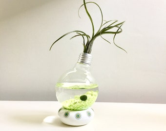 You moss be lucky! Terrarium- marimo Ball ,  Japanese MossBall- Light Bulb White base