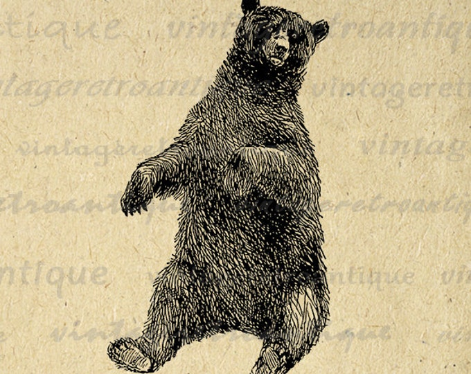 Printable Bear Art Graphic Bear Digital Image Download Forest Nature Animal Antique Clipart Vintage Clip Art Jpg Png Eps HQ 300dpi No.456