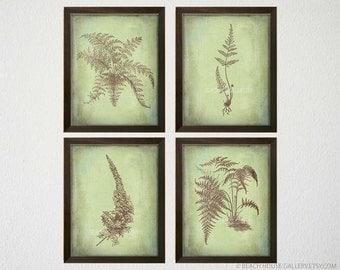 Botanical Wall Art ferns wall art botanical art antique fern prints set of 6