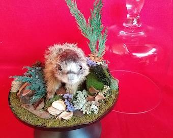 Taxidermy Baby Marmot Glass Dome Display//ground hog/squirrel/bat/rat/rabbit
