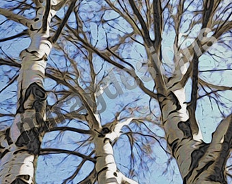 White Poplar Tree with Blue Sky Note Card