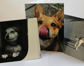 "3 Pack of Izzy Dog Blank Cards 4.25"" x 5.5"""