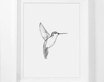Hummingbird Art, Drawing, Hummingbird Drawing, Art Prints, Framed Drawing, Art and Drawing, Sketch Art, Framed Sketched Art, Bird Sketch