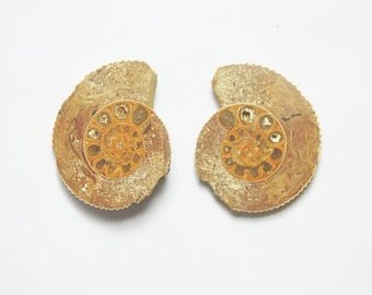 set of 2 mirror image fossil ammonite cabochons