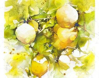 Lemon Tree Study #1: Citrus limon
