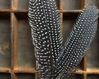 Guinea Fowl feather...