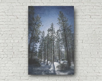 Winter Woodland Snow Art | Abstract Forest Sunlight | Forest Snow Print | Winter Nature Photo | National Forest | Big Bear Lake  California