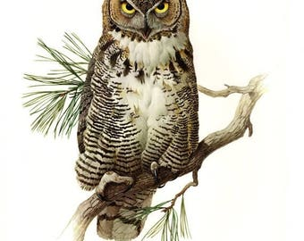 50% Off Estate Sale Vintage Great Horned Owl Poster, PMLansdowne, Glossy Print of Bird Watercolor by  J.F. Lansdowne, 8 x 10 Wall Art