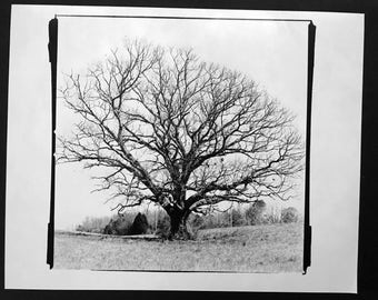 Winter Tree - Black & White Silver Gelatin Print, landscape photography, nature photography