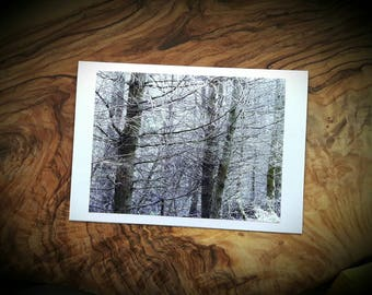 Forest Cards - Pine Branches Art Photographic Cards - Winter Woodland Photograph Greeting Christmas Card - Made to order