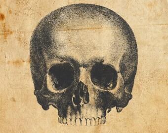 Vintage Skull. Vector, PNG, JPEG. Digital download. Art, print, t-shirts, merchandise. Skeleton, illustration, old, diagram, medical.