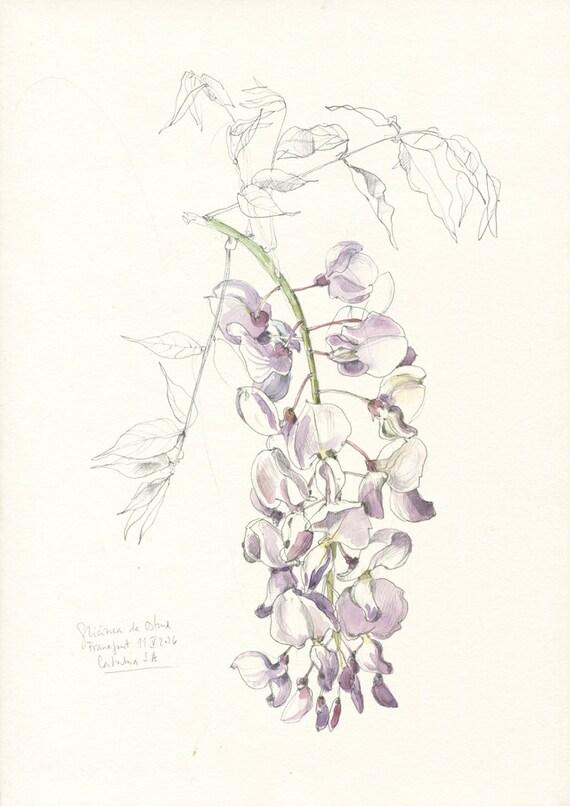 Glicine fiore 28 images tutti pazzi per le piante for Poltrone e sofa sanremo