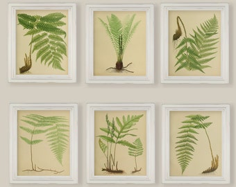 Beautiful Ferns Watercolour Reproductions Prints Set of 6 Size 8x10 in