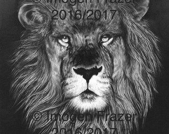 Black and White Print of Charcoal Lion Drawing