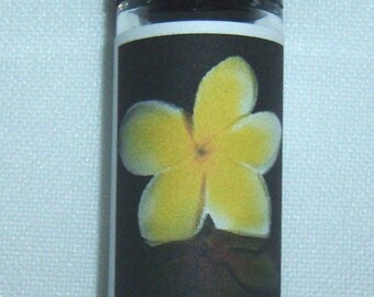 White Ginger and Amber Perfume Oil
