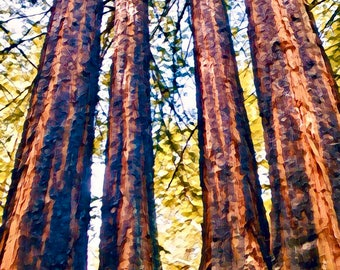 Redwoods Painting Print Modern NatureScape