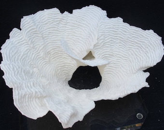 Large Natural White Rugosa Coral