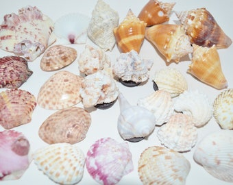 Magnets Sanibel Shells, Sanibel Island Shell Magnets, Shell Magnets, Souvenir Sea Shell Refrigerator Magnets, Sanibel Shells