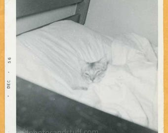 Original Vintage Snapshot Found Photo Vernacular Photo 50s Kitty Cat Laying in Bed Under the Covers 1950s -B909