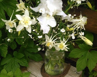 Antique White Columbine Flower Seeds, Mountain Columbine Seeds, Native Wildflowers, Cut Flower Seeds.  FREE SHIPPING in U.S.