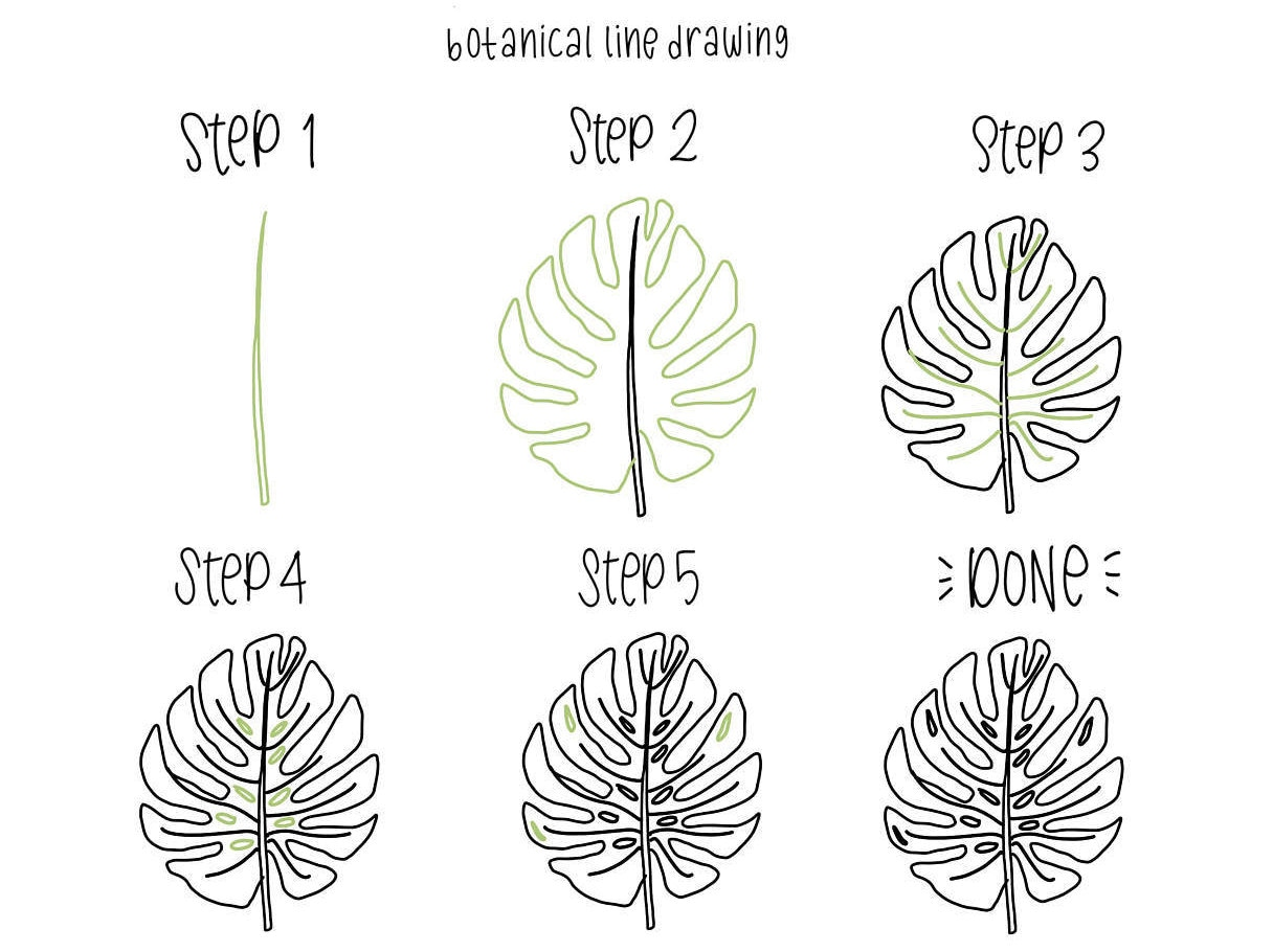 Line Art Step By Step : Ebook pdf download botanical line drawing step by