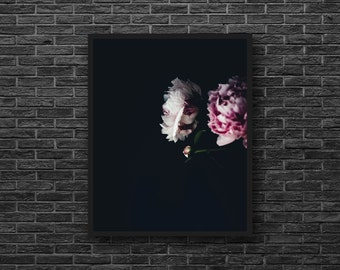 Pink Flower Print - Pink Peony Print - Peony Photography - Black Background - Botanical Print - Flower Wall Decor - Peony Photo - Vertical