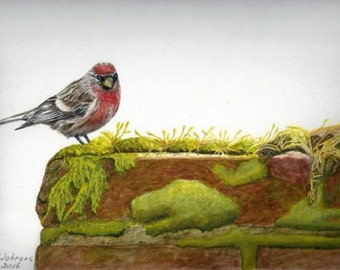 Fine art painting, watercolor, birds, small common redpoll