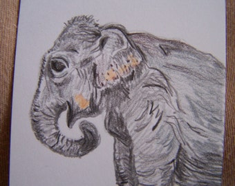 Art Trading Card, Asian Elephant, ACEO Miniature