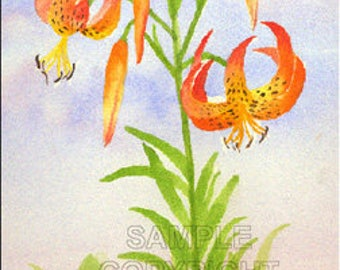 Tiger Lily Watercolor Greeting Card by J. P. Haydock (also available as a print)