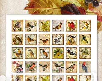 1x1 inch Images ANTIQUE BIRDS Digital Collage Sheet Printable download for square tray pendants magnets vintage decoupage paper by ArtCult