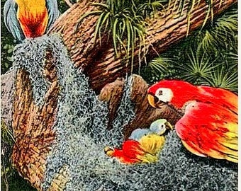 Vintage Florida Postcard - A Macaw Family at Parrot Jungle, Miami (Unused)