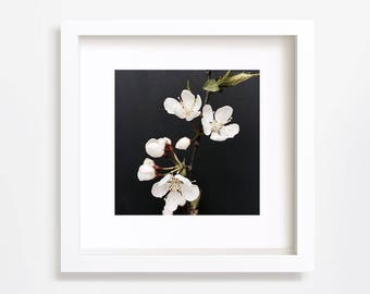 Flower Art Print, White blossom Flower Photo, Wild Cherry flower, Black Background, Nature Photo, Home Decor, 5x5, 8x8, 9x9, 10x10, 12x12