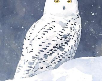 Snowy Owl Watercolor, Fine Art Print, Winter bird painting
