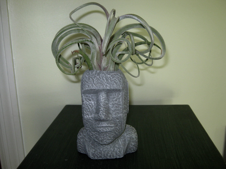 Face Plant Pot Part - 32: ?zoom