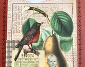 Collage Art, Altered Book, Robin, Beetles, Life, Book Cover, Vintage Book