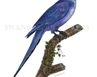 Blue Parrot Print. Blue Hyacinth Macaw Amazon Blue Parrot. Blue Macaw Parrot Print. Amazon Blue Parrot Watercolored Nature Study Art Print