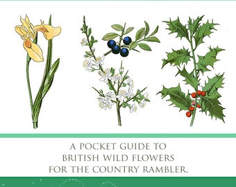 Illustrated Color Guide To BRITISH WILD FLOWERS Everything The Country Rambler or Artist Needs To Know 328 pages Printable Instant Download
