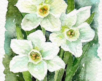 Paperwhites 4x6 Original watercolour painting, spring white flowers, narcissus, daffodils, jonquils