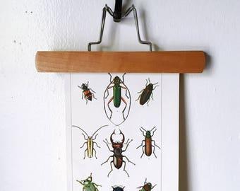 Beetles. Vintage Digital Printable Art. Entomology. Science Gift. Home Wall Decor. Gift for Him.