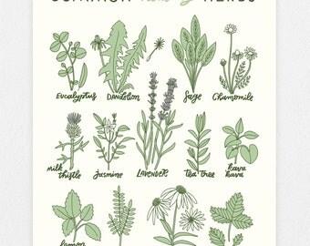 Healing Herbs 11 x 14 Screen Print